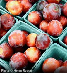 Methley Plum - Prunus salicina